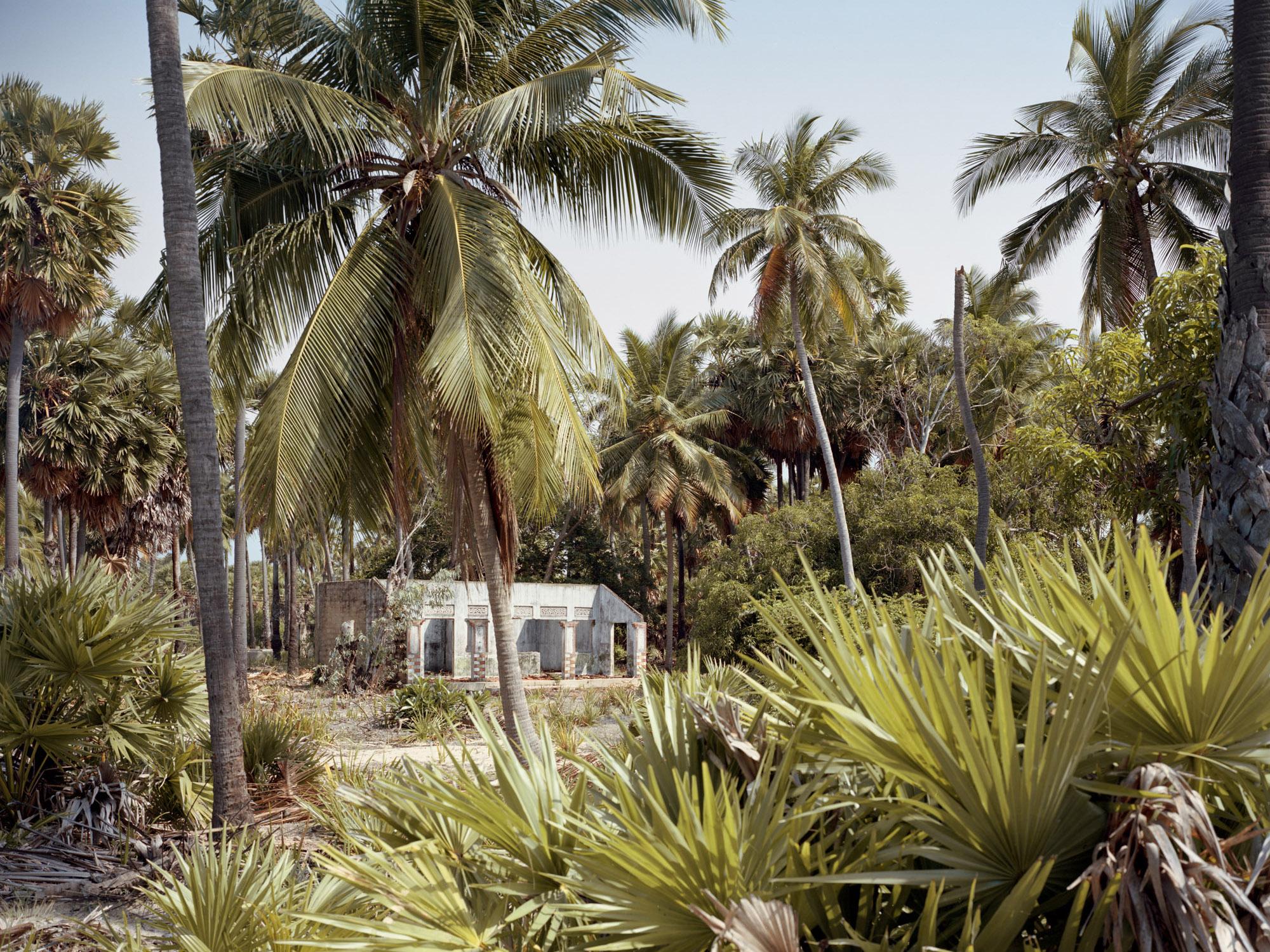 Under the palmyra tree